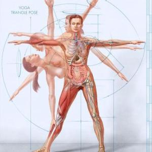 anatomy-female-yoga-1_wry